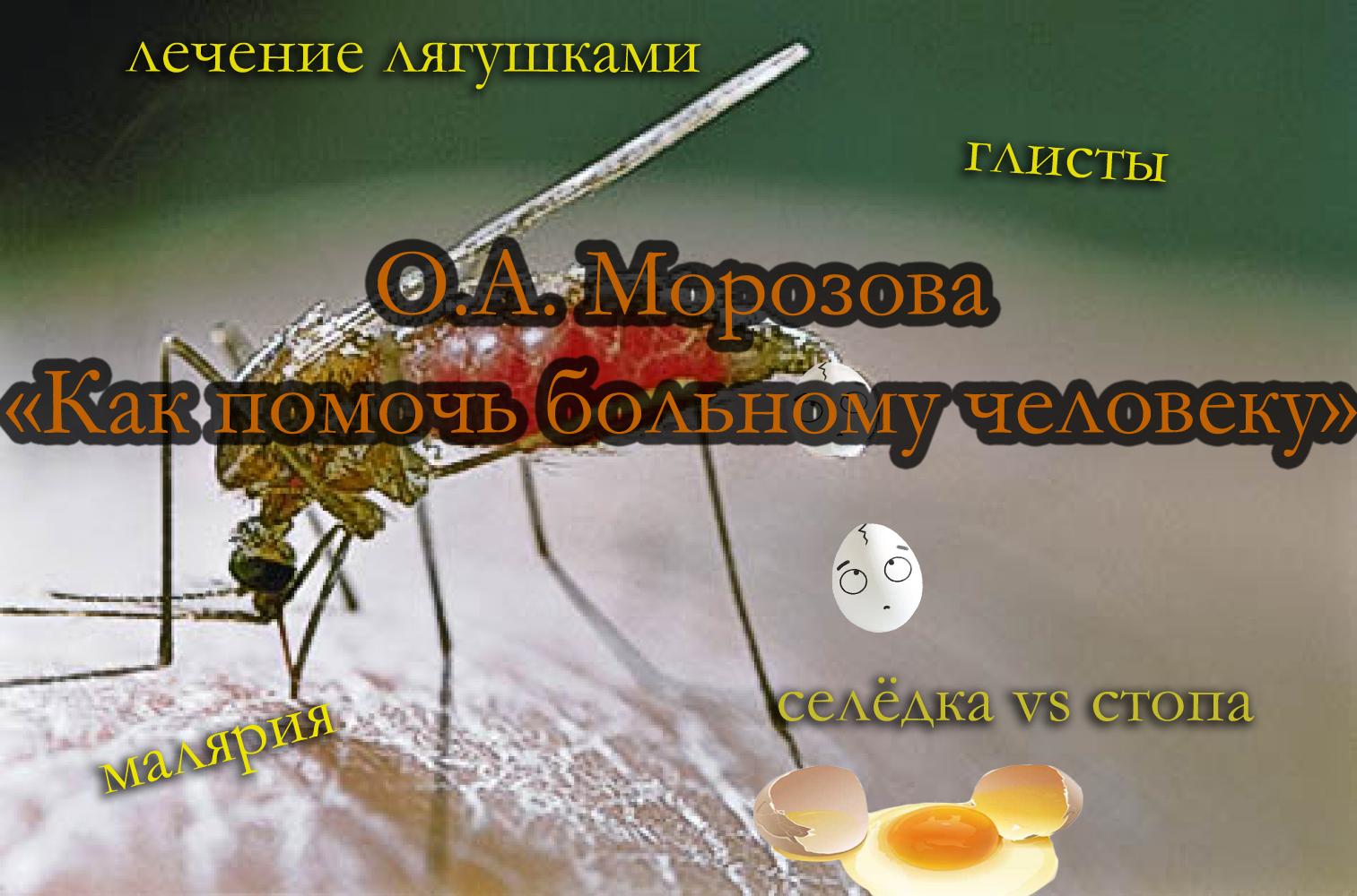 morozova 6
