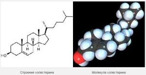 Молекула холестерина