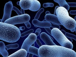 Бактерии - один из виновников ОРЗ
